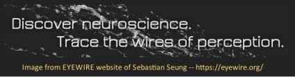 Image links to  EYEWIRE website of Sebastian Seung
